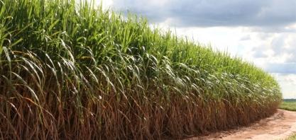 PIB da agropecuária crescerá 1,4% em 2019, estima Ipea