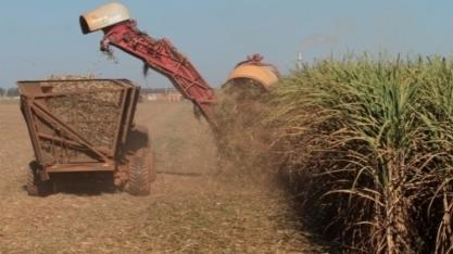 Técnicos vão a campo para pesquisar safra de cana-de-açúcar