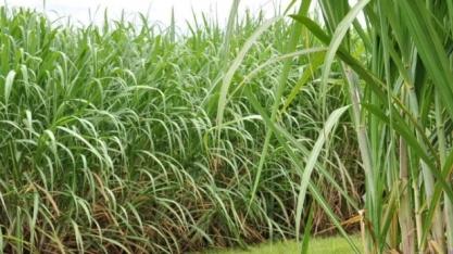 Bom Dia Agro desta quinta fala sobre os preços do etanol