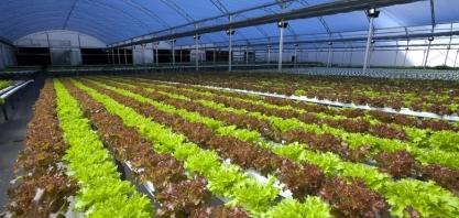 Fábrica de caminhões planta mais de 2 toneladas de verduras