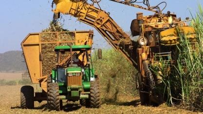 Sindaçúcar-AL: safra já tem mais de 393 mil toneladas de açúcar produzidas