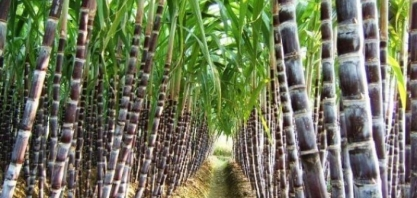 Empresa brasileira que produz proteína para cana recebe aporte