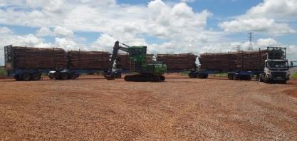 Suzano inicia operação com carretas de 52 metros em Três Lagoas (MS)
