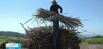 Produtores de cana comemoram resultado da colheita no Sertão
