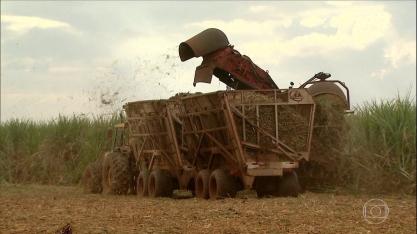 Produção de cana-de-açúcar deve ter alta de 3,6% em relação a safra anterior
