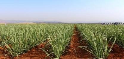 IAC, da Secretaria de Agricultura de SP, orienta sobre os benefícios da irrigação na cana-de-açúcar