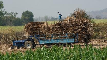 Cotações do açúcar sobem com prejuízos provocados pelo clima adverso na Tailândia