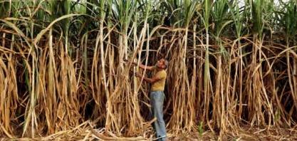 Índia sabe como e por que fazer mais etanol e visita do Bolsonaro não a apressará