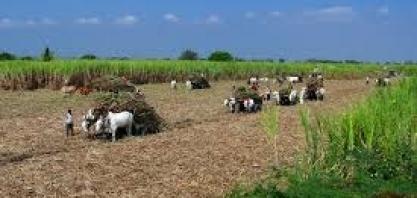 Brasil apresenta petição à OMC contra subsídios indianos ao açúcar