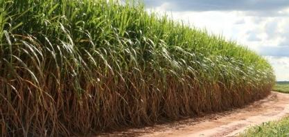 Perspectivas açúcar: produção mundial pode se retrair, após duas temporadas de superávit