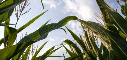 Bunge vende participação em usina de etanol de Iowa (EUA)
