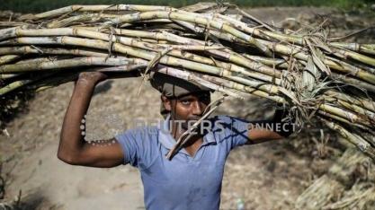 Malásia comprará mais açúcar da Índia para resolver disputa sobre óleo de palma