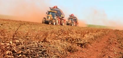 Secretaria reúne 150 produtores, técnicos e estudantes para discutir produção de amendoim no Oeste paulista