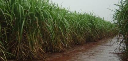 Maior volume de chuva no país ultrapassa os 100mm