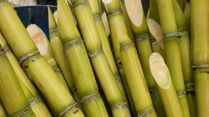 Produção acumulada de açúcar chega a 884 mil toneladas
