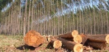 MS quer agregar valor a produção agropecuária com foco na sustentabilidade