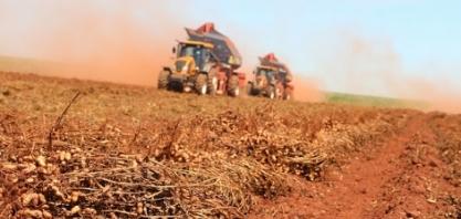 Produção de amendoim será discutida em Pindorama, em evento realizado pela Secretaria de Agricultura de São Paulo