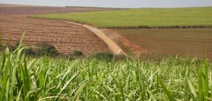 Rabobank e governo holandês fomentam agricultura sustentável