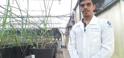Pesquisa da USP de Piracicaba mostra que uso de bactéria eleva produtividade de cana-de-açúcar