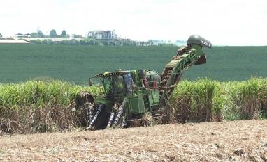 Moagem da cana-de-açúcar tem alta de 88% a 2 semanas do fim da safra 2019/2020 na região Centro-Sul