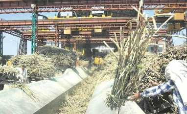 Rabobank eleva estimativa para déficit global de açúcar em 2019/20