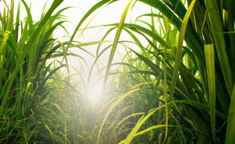Bayer reúne agrícola e indústria para debater formas de melhorar a qualidade da matéria-prima