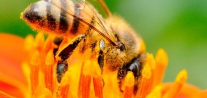 Movimento Colmeia Viva busca parcerias com setor sucroenergético para interligar produtores e apicultores