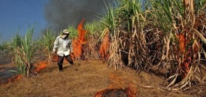 Tailândia tem menor safra de cana em 10 anos em 2019/20 devido a impactos de seca