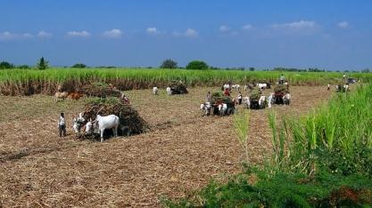 Índia amplia subsídios ao campo e 'testa' limites estabelecidos pela OMC