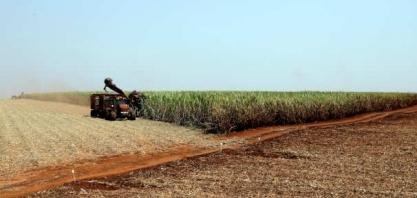 Semana abre com o açúcar e o etanol correndo atrás do petróleo desabando