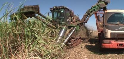 Pandemia muda os planos das usinas de cana-de-açúcar de São Paulo