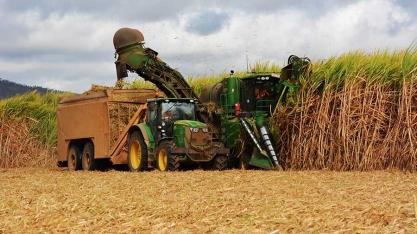OMC só deverá decidir conflito do açúcar no ano que vem
