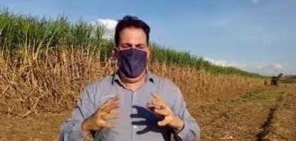 Como realizar a nutrição e os tratos culturais nos canaviais com esse cenário de crise