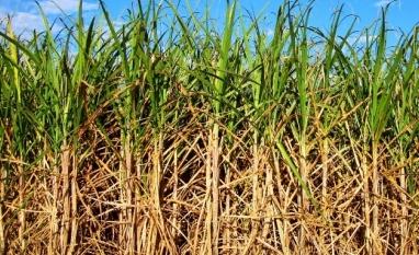 No Dia Mundial do Meio Ambiente, redução da alíquota do ICMS do etanol seria um grande presente aos paraibanos