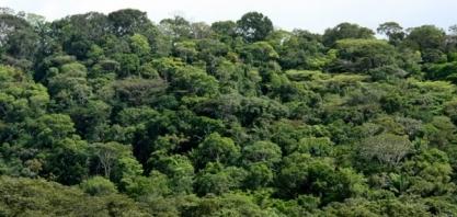 Desmatamento zero em AL demonstra atuação de usinas na preservação ambiental