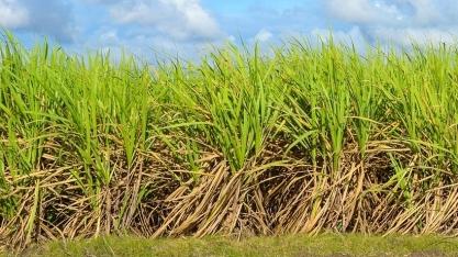 Preços de açúcar e etanol no curto prazo no Brasil: o que esperar?