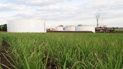 Mercado e qualidade da matéria-prima fazem usinas priorizar açúcar