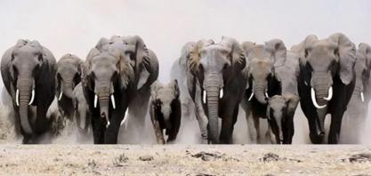 100 Milhões de Elefantes! Professor da USP lança desafio em sustentabilidade!