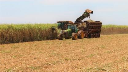 Safra da cana-de-açúcar tem início mais lento em MS