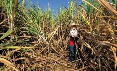 Açúcar: China forte, Brasil fora das vendas em outubro e Tailândia com problemas sustentam preços
