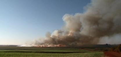 Queima de plantações de cana volta a ser permitida no Paraná