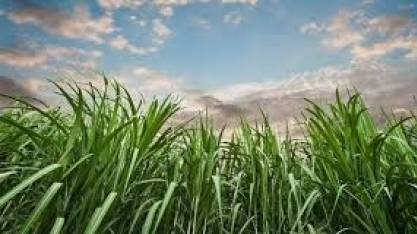O agronegócio que funciona sem desmatar