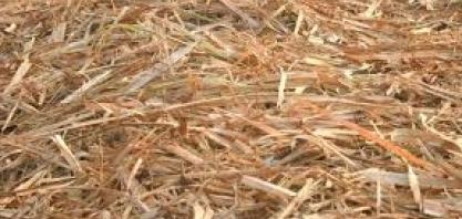 Empresa de produção de açúcar da região doa palhada residual de cana