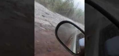 Tempestade de granizo arrasa canavial em Rio Brilhante, Mato Grosso do Sul