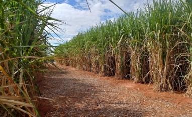 Vale do Verdão arremata Usina São Luís, da Abengoa Bioenergia