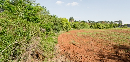 Estudo estabelece determinantes do custo de oportunidades de fazendeiros em manterem reserva legal