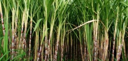 Agropecuária deve gerar R$ 82,75 bi em Minas Gerais