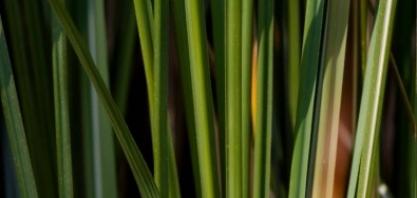 Estudo aponta estratégia para mitigar a mudança no clima por meio da adoção de biocombustíveis