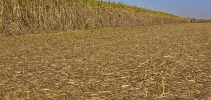 Cana zoom: produtividade agrícola atinge 85 ton por hectare