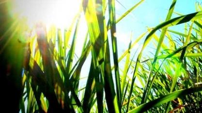 """""""Petróleo da bioeconomia"""", cana para etanol 2G é base de mudanças na matriz energética"""
